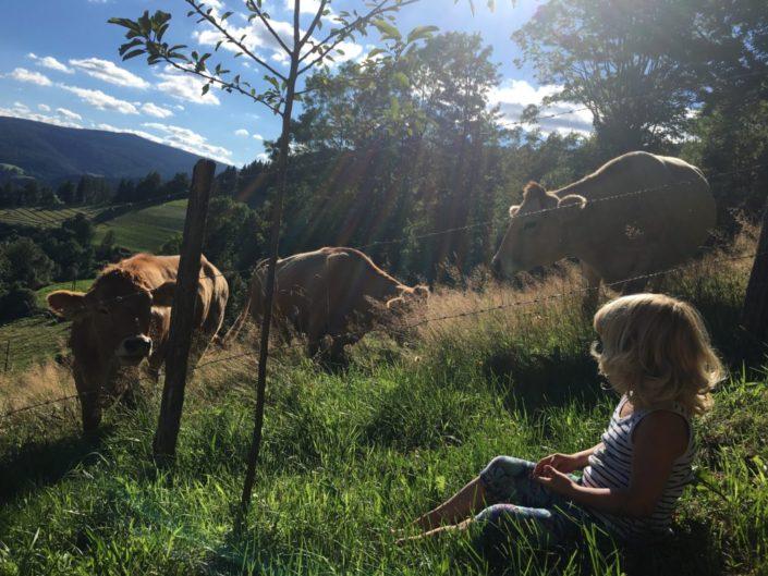 Kühe im Sommer