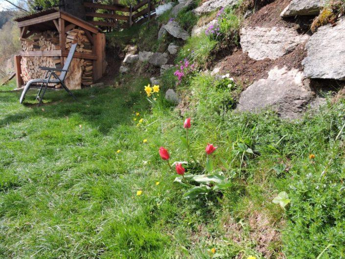Gartenaufnahme