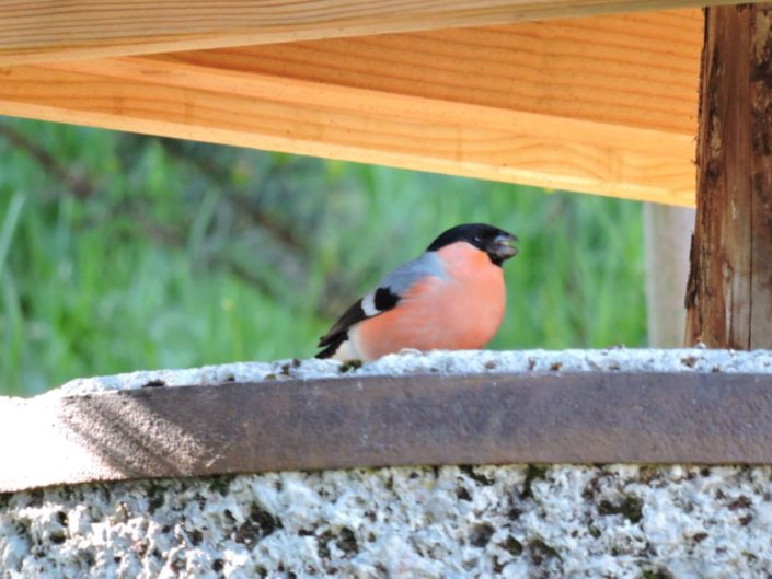 Super Vogelbeobachtung möglich