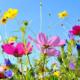 Frühling - Huette4You