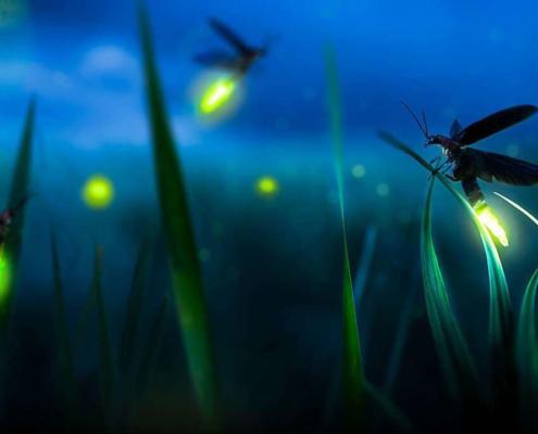 Glühwürmchenzeit auf der Glühwürchmchenhütte